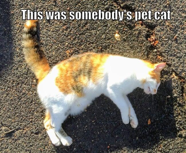 kona kitties
